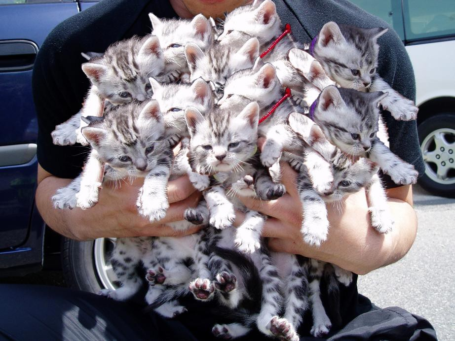 Gausi kačių šeimynėlė