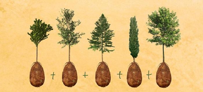 Dar būdamas gyvas žmogus galės pasirinkti kokiu medžiu nori virsti po mirties
