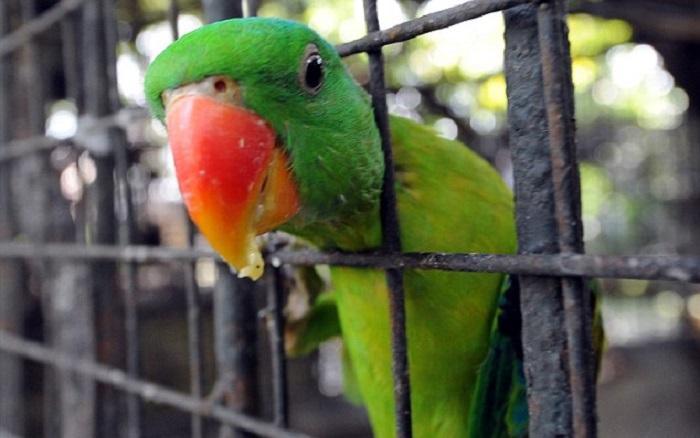papuga-uz-grotu