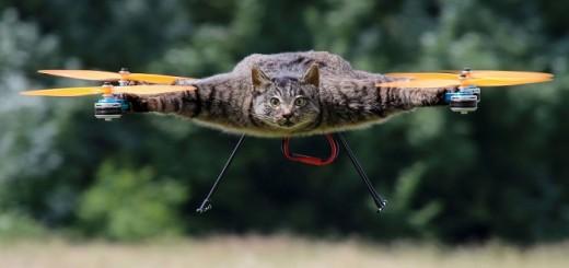 kate-dronas
