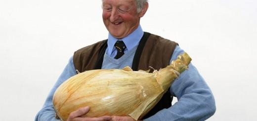didžiausias svogūnas, didelis svogūnas