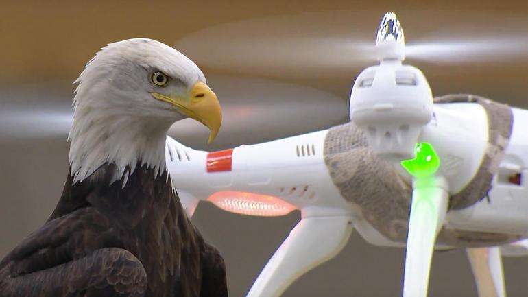 erelis-ir-dronas