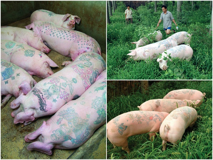 """Šie """"meno kūriniai"""" gyvena normalų kiaulišką gyvenimą"""